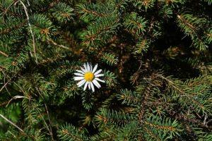 Növény webshop